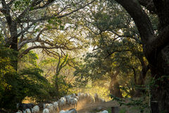 Viele Pferde, die langen Weg laufen lassen Lizenzfreies Stockfoto