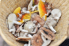 Viele Pilze Lizenzfreies Stockfoto