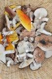 Viele Pilze Lizenzfreie Stockfotografie