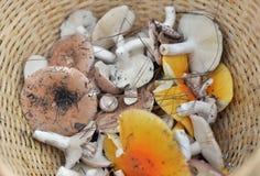 Viele Pilze Lizenzfreies Stockbild