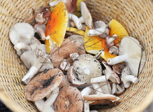 Viele Pilze Stockbild