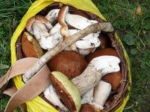 Viele Pilze im Korb Stockfoto