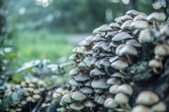 Viele Pilze im Wald Lizenzfreie Stockfotos