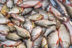 Viele Porträts der Fische Stockbild