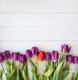 Viele purpurroten Tulpen auf Holztisch Stockfotografie