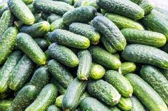 Viele reifen grünen Gurken Lizenzfreie Stockbilder