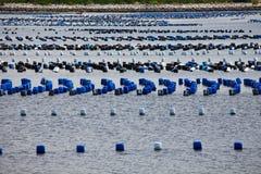 Viele Reihen von den Pontons, die auf Meer schwimmen Stockfotos