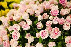 Viele rosa Rosen wurde es zu einem schönen geholt stockfotos