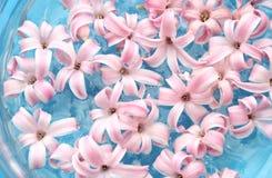 Viele Rosafarben im Wasser Stockbild