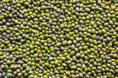 Viele Samen von Mungobohne (können als Hintergrund verwendet werden) Stockfotos