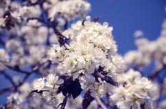 Viele schneeweißen Blumen Stockbild