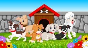 Viele Schoßhunde im Park Lizenzfreie Stockfotografie