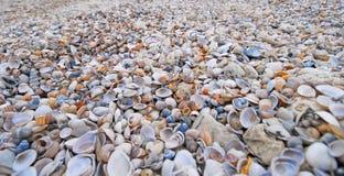 Viele Seashells Stockfoto