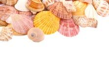 Viele Seashells auf weißem Hintergrund Stockfotografie