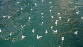 Viele Seemöwen beeinflussen auf blaue Meereswellen am sonnigen Tag stock footage
