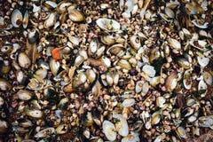 Viele Seeoberteile von Austern liegen auf dem Ufer lizenzfreie stockfotos