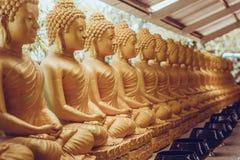 Viele sitzende Buddha-Statuen in Thailand Stockfotos