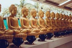 Viele sitzende Buddha-Statuen in Thailand Stockfotografie