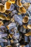 Viele sonnengetrockneten Auberginen auf Seil sind Verkauf stockfotografie
