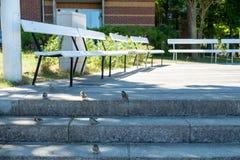 Viele Spatzen warten auf eine Krume auf einem Treppenhaus lizenzfreies stockfoto