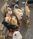 Viele Streuhunde Stockbild