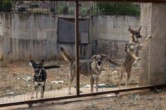Viele streunenden Hunde zugeschlossen hinter Masche Hunderettungskonzept Lizenzfreie Stockbilder