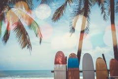 Viele Surfbretter neben Kokosnussbäumen am Sommer setzen auf den Strand stockfotos