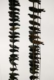 Viele Tauben auf einem Draht Lizenzfreie Stockfotos