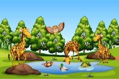 Viele Tier in dem Teich stock abbildung