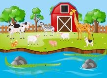 Viele Tiere durch den Fluss Stockbild
