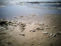 Viele toten Fische stockfoto