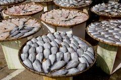 Viele trockenen Gourami fishs auf Bambusplatten Lizenzfreie Stockfotografie