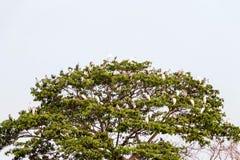 Viele Vögel sind auf dem Baum bei Sonnenuntergang lizenzfreie stockbilder