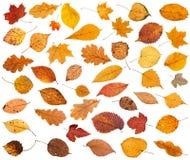 viele verschiedenen getrockneten Herbst gefallenen Blätter lokalisiert Stockbild