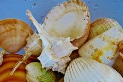 Viele verschiedenen kleinen Muscheln im Wasser mit verschiedenen Mustern stockfoto