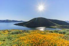 Viele von Blüte der wilden Blume bei Diamond Valley Lake lizenzfreie stockbilder