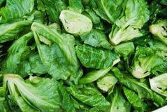 Viele von kleinem Kopfsalat im Frischmarkt Lizenzfreies Stockbild