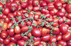 Viele von saftigen reifen roten Tomaten Stockbild