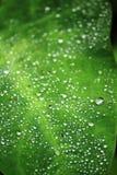 Viele Wassertropfen auf einem grünen Blatt stockbild