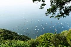 Viele weißen Boote Stockfotos