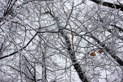 Viele Zeilen des Schneewaldes Stockbilder