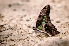 Vielfalt von Schmetterlingsspezies stockfoto