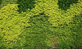 Vielzahl von Anlagen in der vertikalen Gartenbeschaffenheit Lizenzfreies Stockbild