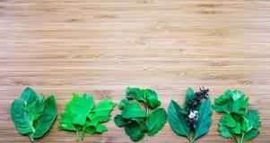 Vielzahl von Aromablättern von thailändischen traditionellen Kräutern auf hölzerner Rückseite Lizenzfreies Stockbild