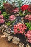 Vielzahl von bunten Azaleenblumen und von verschiedenen Anlagen im königlichen Gewächshaus von Laken Belgien Stockfotografie