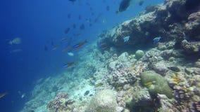 Vielzahl von bunten Fischen im Indischen Ozean Lizenzfreie Stockbilder