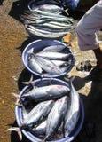 Vielzahl von Fischen in einem Eimer auf Eis in der Sonne, vielleicht ozeanischer Blaufisch und Hornhecht Lizenzfreies Stockbild
