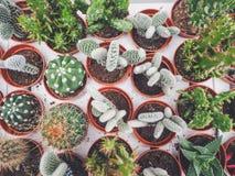 Vielzahl von kleinen Kaktuspflanzen in den Plastiktöpfen lizenzfreie stockfotos