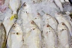 Vielzahl von Meeresfrüchten der frischen Fische im Marktnahaufnahmehintergrund Stockfoto