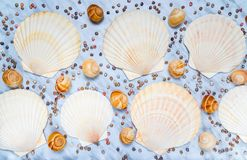 Vielzahl von Muscheln auf blauem Marmorhintergrund Stockbilder